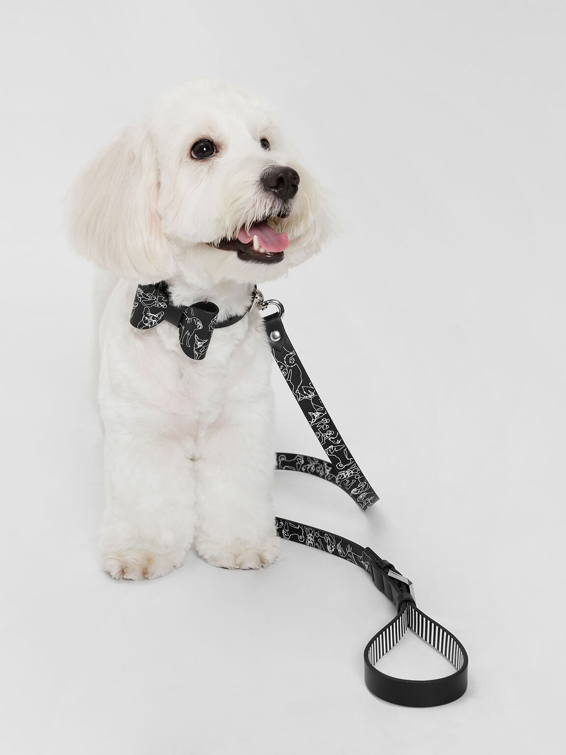 Printed Pet Leash, Black, hi-res