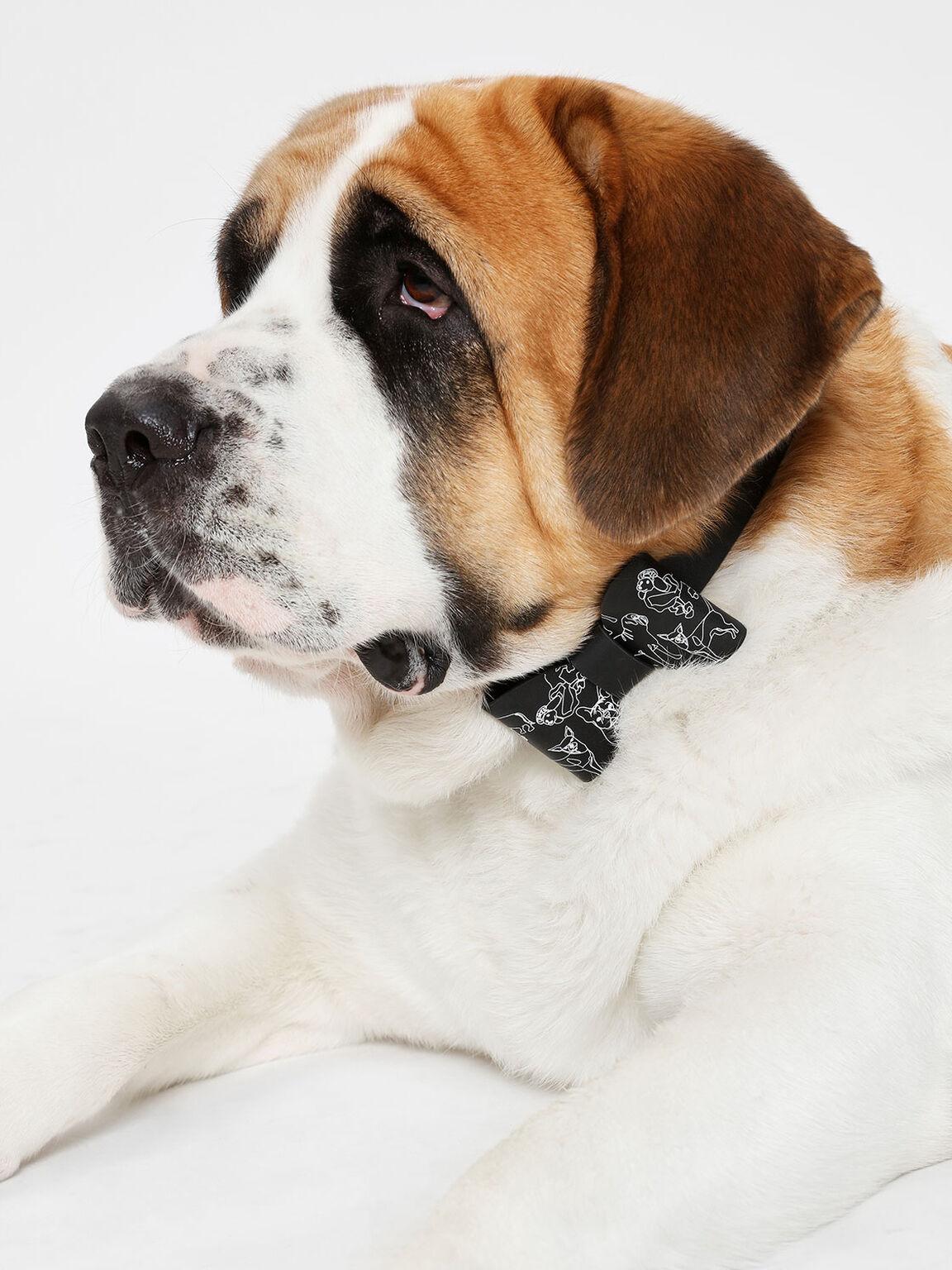 Printed Pet Collar, Black, hi-res